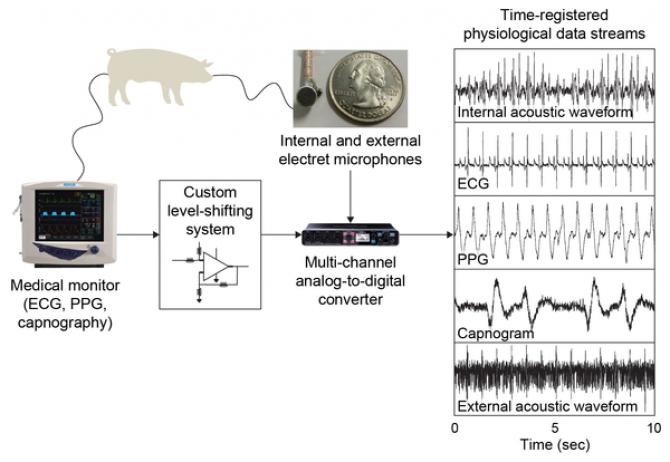 돼지가 삼킨 측정장비가 얻어낸 생체정보와, 외부에서 측정한 생체정보가 같은 결과를 냈다. 연구팀이 개발한